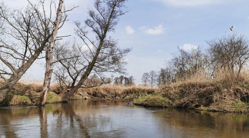 Operacja Czysta Rzeka i EkoBabki