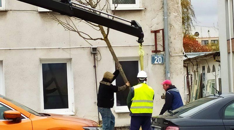 Nowe drzewa już zdobią ul. Puławską